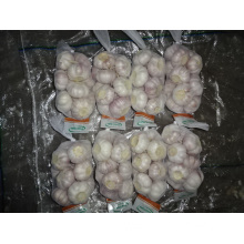 Fresh 2019 Normal White Garlic